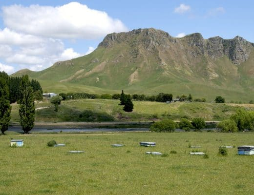 Local beehives in foreground of Te Mata Peak, Hawke's Bay, New Zealand